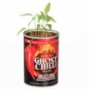 Picture of: Grow Your Own Ghost Chilli | Secret Santa Generator Gifts