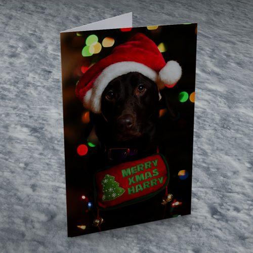 Picture of: Personalised Christmas Card - Sad Christmas Dog | Secret Santa Generator Gifts
