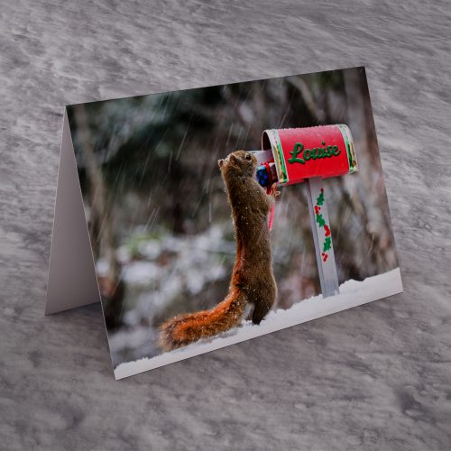 Picture of: Personalised Christmas Card - Squirrel Post | Secret Santa Generator Gifts